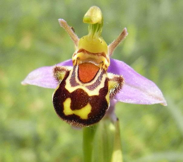 flowers-look-like-something-else-orchids-pareidolia-13