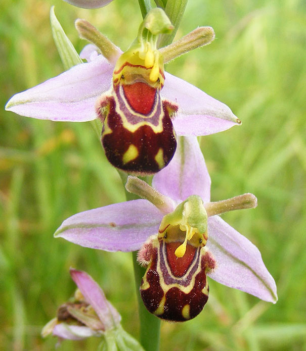 flowers-look-like-something-else-orchids-pareidolia-14
