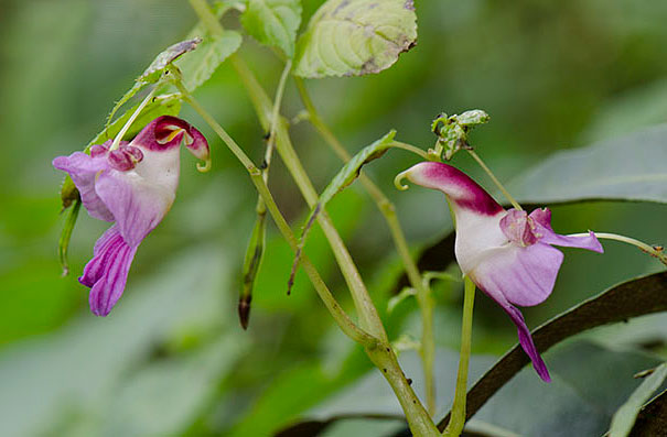 flowers-look-like-something-else-orchids-pareidolia-21