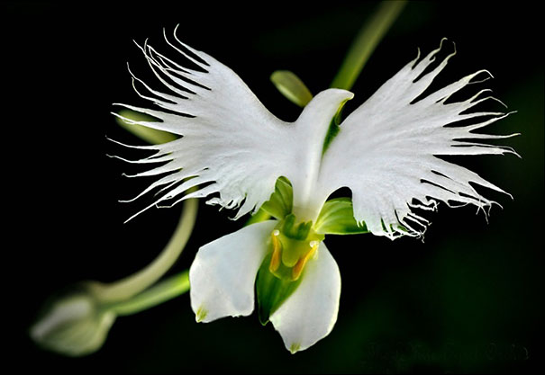 flowers-look-like-something-else-orchids-pareidolia-26