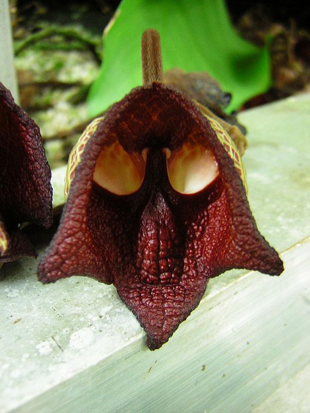flowers-look-like-something-else-orchids-pareidolia-34