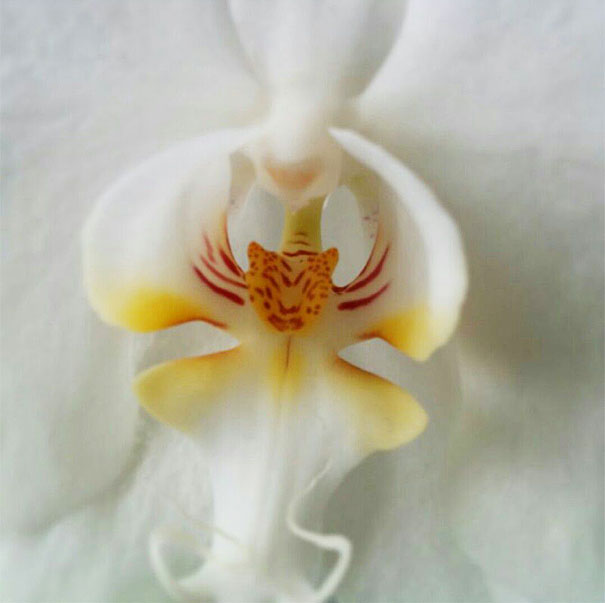 flowers-look-like-something-else-orchids-pareidolia-35