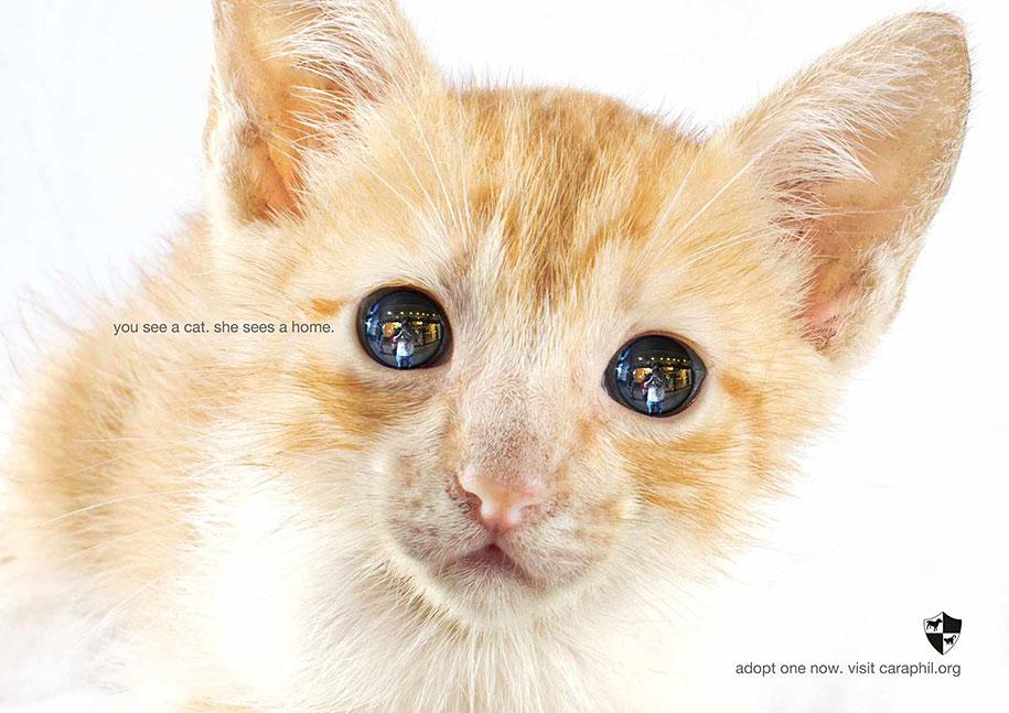 social-awareness-powerful-animal-ads-31