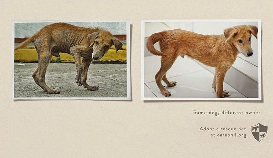 social-awareness-powerful-animal-ads-38