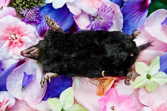 natura-morte-honoring-dead-animals-marina-ionowa-gribina-4