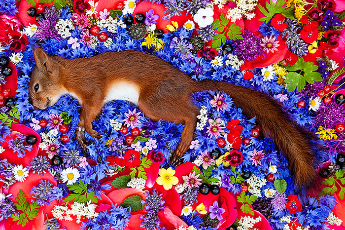 natura-morte-honoring-dead-animals-marina-ionowa-gribina-6