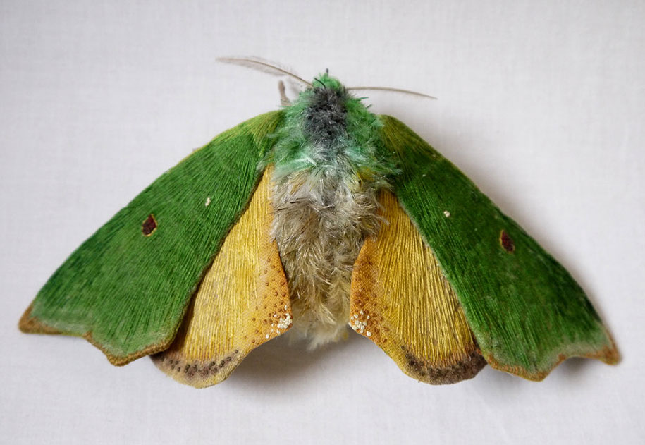 textile-art-fabric-sculptures-insects-moths-butterflies-yumi-okita-13