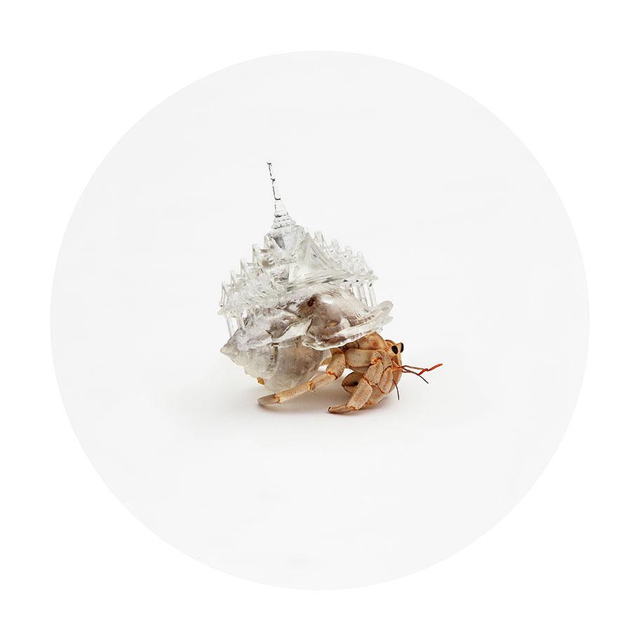 3d-printed-hermit-crab-shells-aki-inomata-2