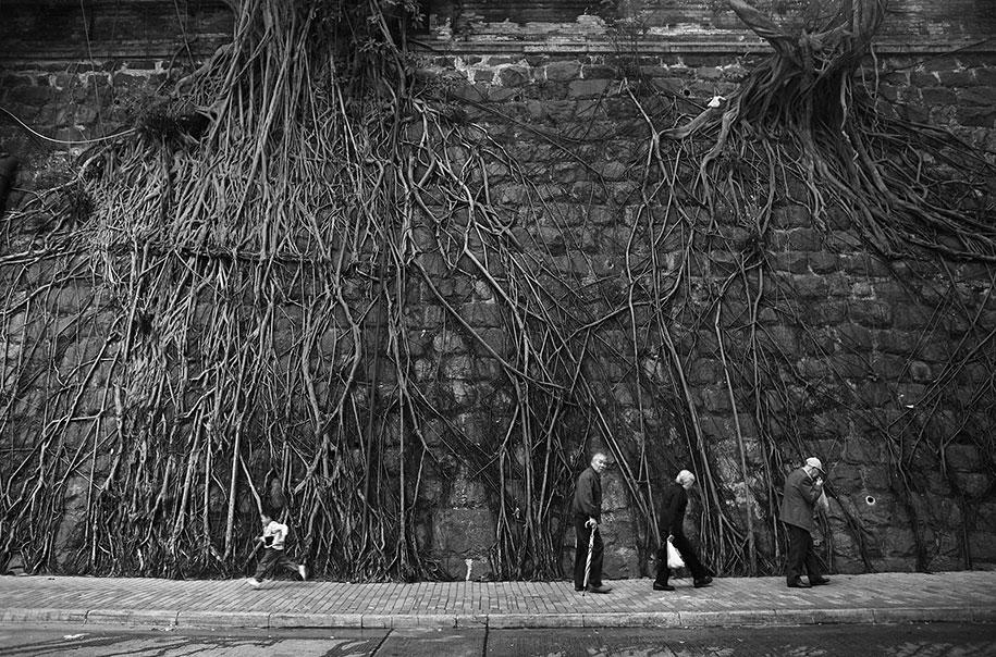 beautiful=tree-root-patterns-concrete-14