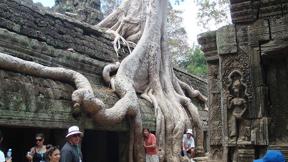 beautiful=tree-root-patterns-concrete-16