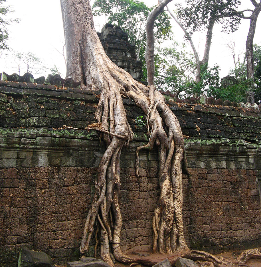 beautiful=tree-root-patterns-concrete-21