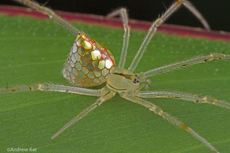 mirror-spider-animal-macro-photography-2