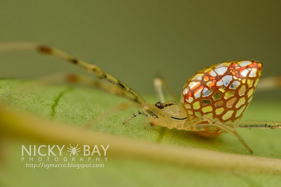 mirror-spider-animal-macro-photography-5