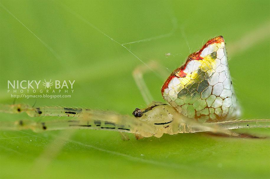 mirror-spider-animal-macro-photography-8