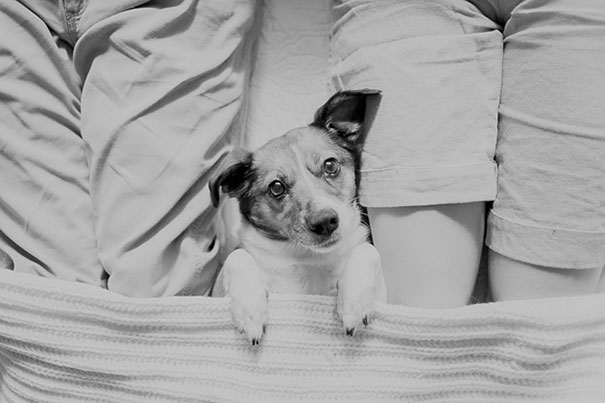 snuggles-dog-baby-photos-count-it-joy-photography-jamie-clauss-11