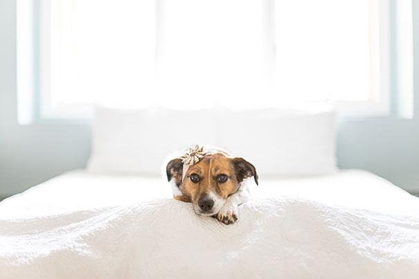 snuggles-dog-baby-photos-count-it-joy-photography-jamie-clauss-13