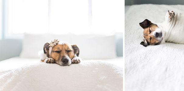 snuggles-dog-baby-photos-count-it-joy-photography-jamie-clauss-17