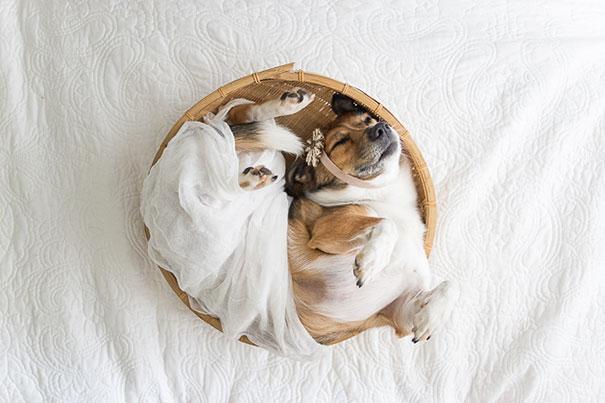 snuggles-dog-baby-photos-count-it-joy-photography-jamie-clauss-7