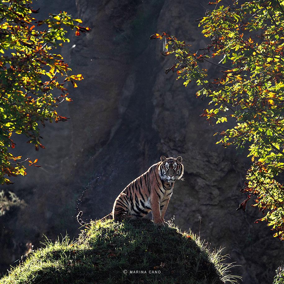 wildlife-animal-photography-marina-cano-11