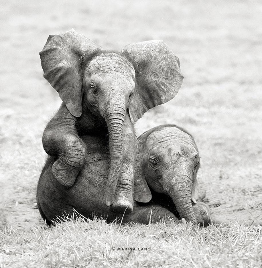 wildlife-animal-photography-marina-cano-13