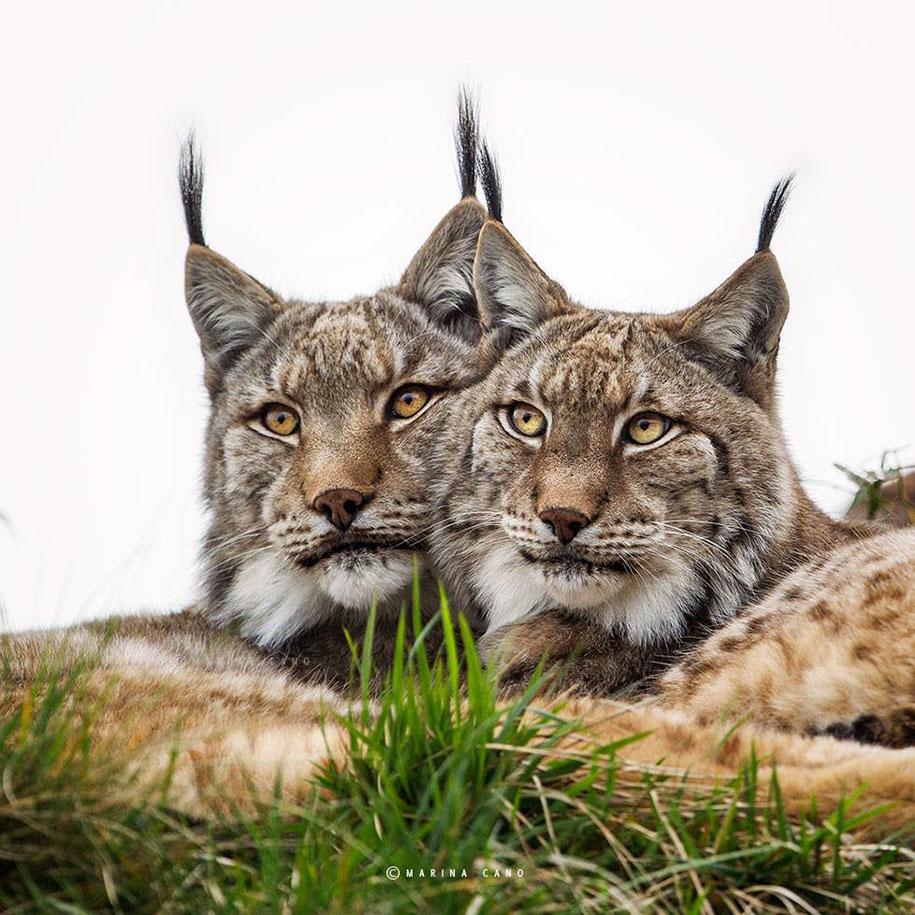 wildlife-animal-photography-marina-cano-19