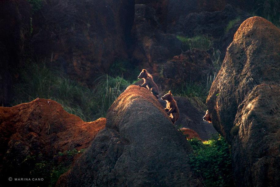 wildlife-animal-photography-marina-cano-20