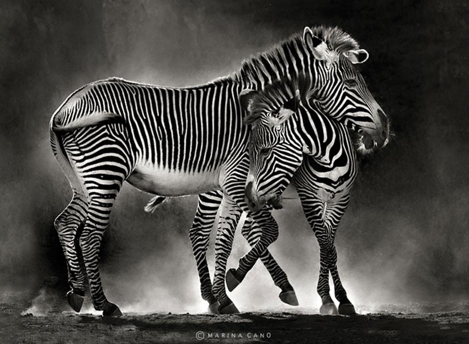 wildlife-animal-photography-marina-cano-24