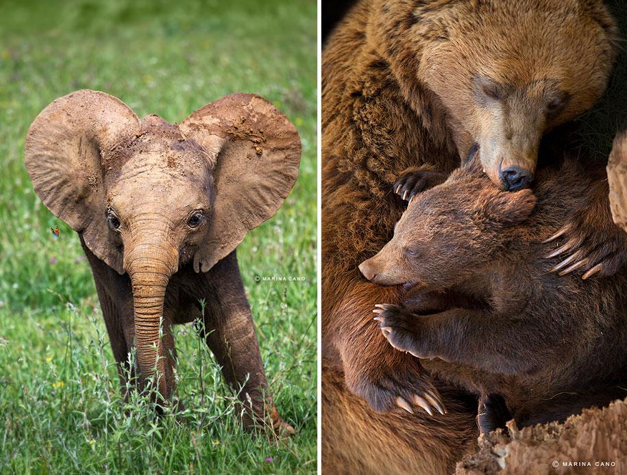 wildlife-animal-photography-marina-cano-25