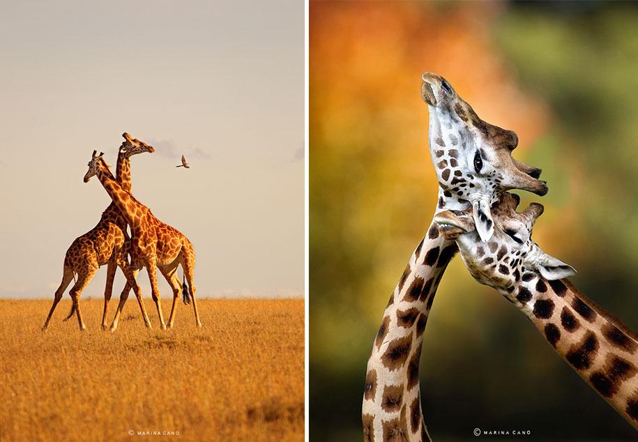 wildlife-animal-photography-marina-cano-5