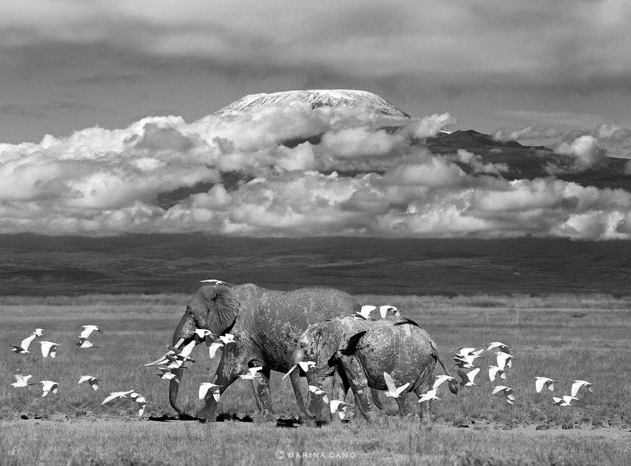 wildlife-animal-photography-marina-cano-7