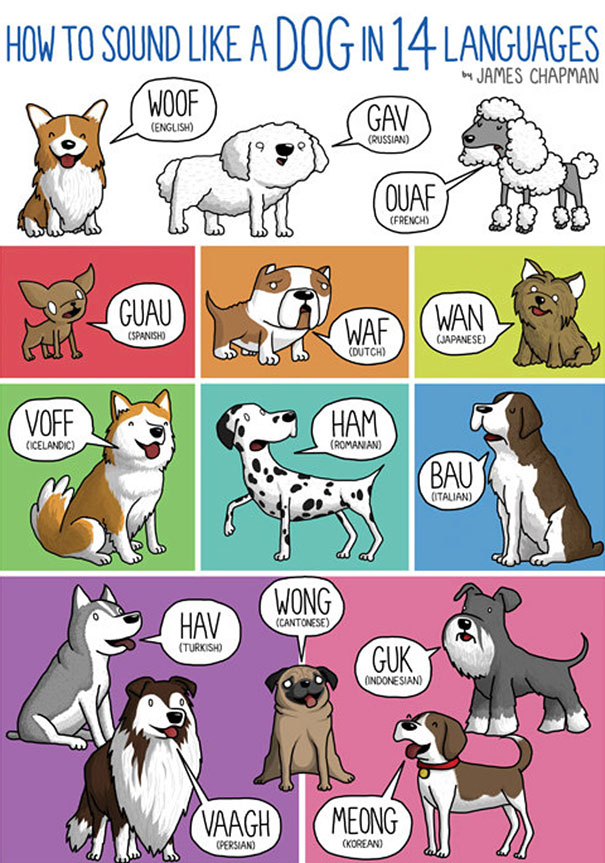 different-languages-expressions-illustrations-james-chapman-7