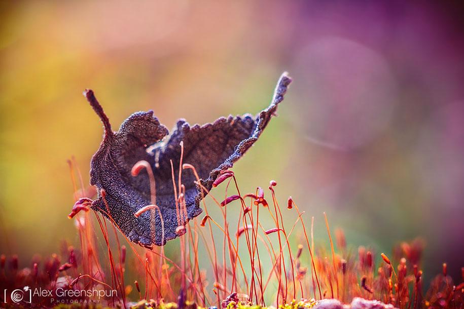 fall-nature-photography-autumn-colors-alex-greenshpun-1