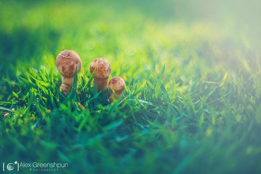fall-nature-photography-autumn-colors-alex-greenshpun-10