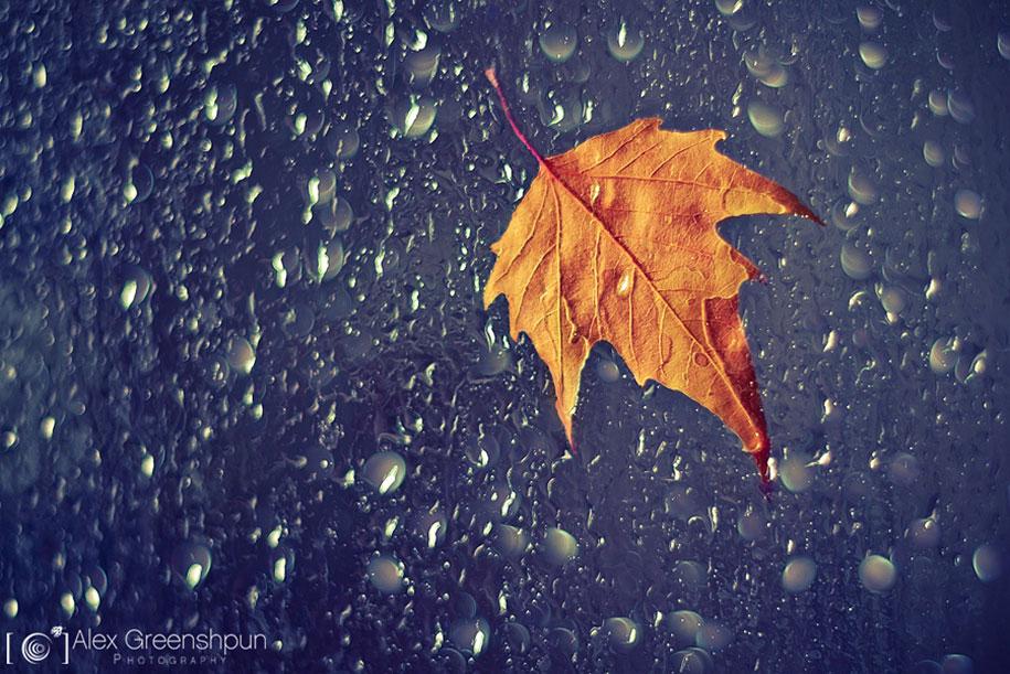 fall-nature-photography-autumn-colors-alex-greenshpun-11