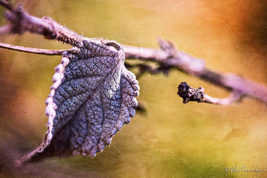 fall-nature-photography-autumn-colors-alex-greenshpun-12