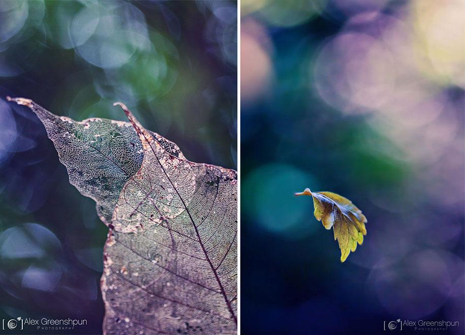 fall-nature-photography-autumn-colors-alex-greenshpun-13