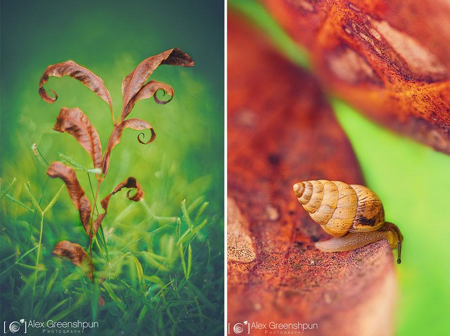 fall-nature-photography-autumn-colors-alex-greenshpun-15