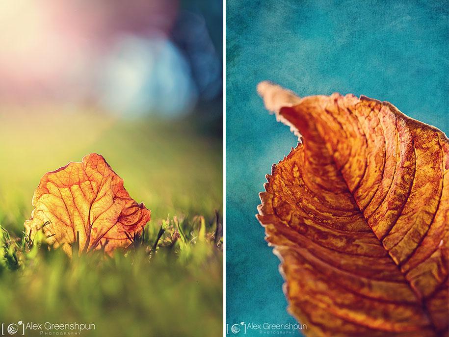 fall-nature-photography-autumn-colors-alex-greenshpun-21