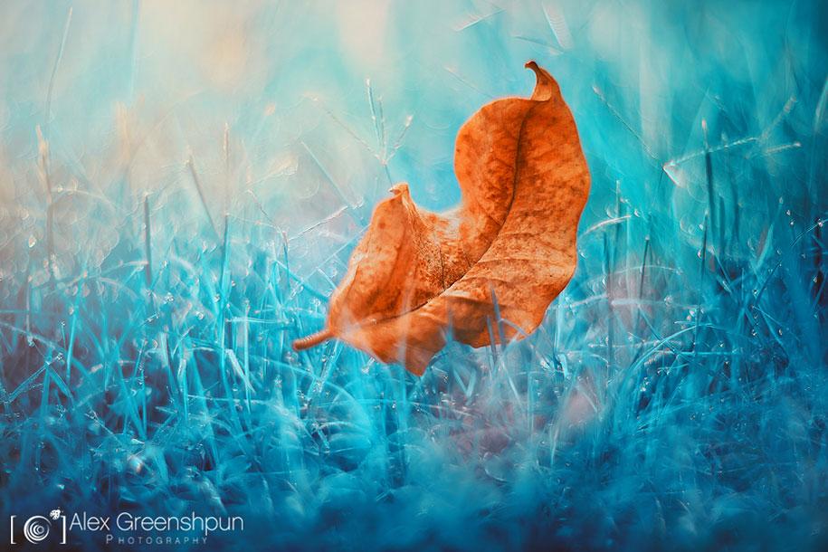 fall-nature-photography-autumn-colors-alex-greenshpun-25