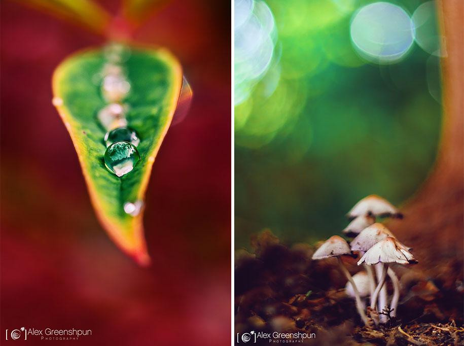 fall-nature-photography-autumn-colors-alex-greenshpun-3