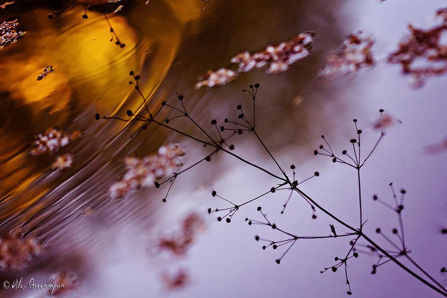 fall-nature-photography-autumn-colors-alex-greenshpun-6