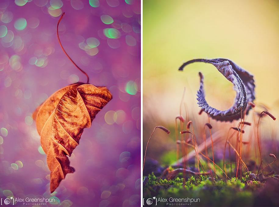 fall-nature-photography-autumn-colors-alex-greenshpun-7