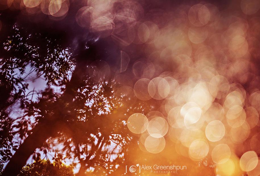 fall-nature-photography-autumn-colors-alex-greenshpun-8