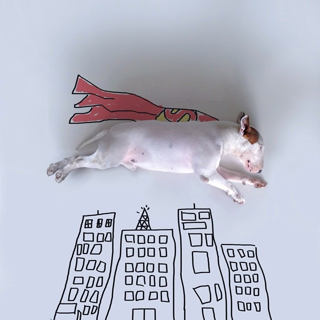 jimmy-choo-bull-terrier-interactive-illustrations-rafael-mantesso-2