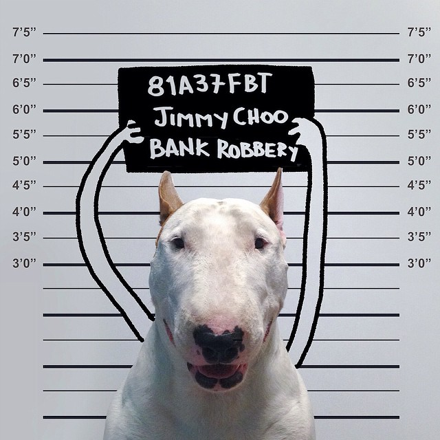 jimmy-choo-bull-terrier-interactive-illustrations-rafael-mantesso-4
