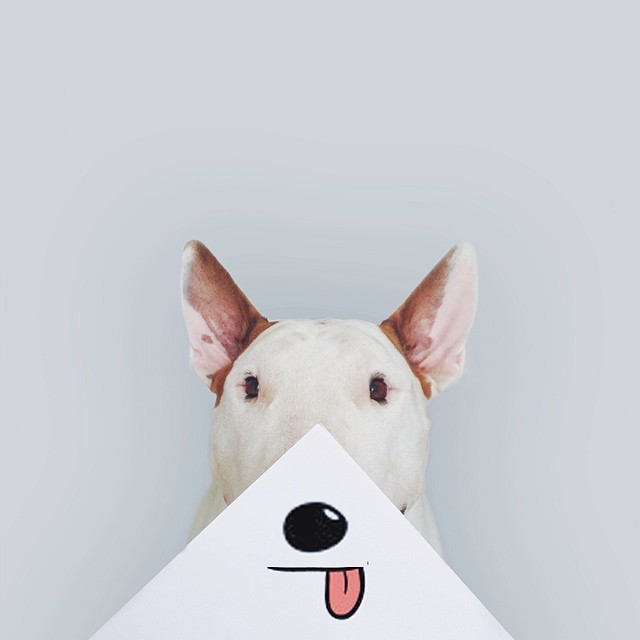 jimmy-choo-bull-terrier-interactive-illustrations-rafael-mantesso-6