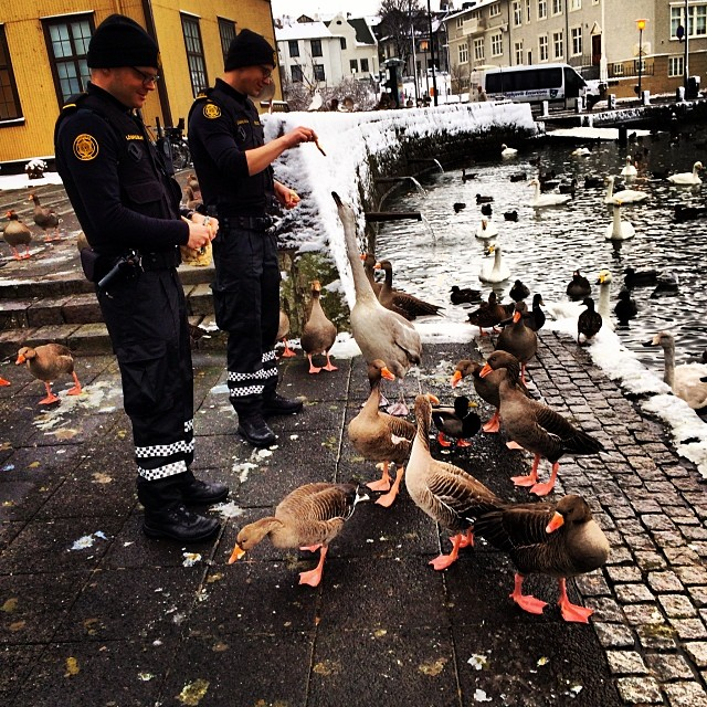 reykjavik-police-logreglan-instagram-iceland-8