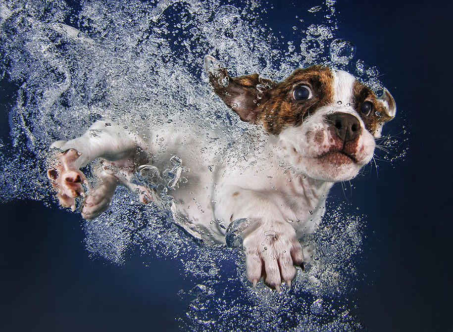 underwater-puppy-animal-photography-seth-casteel-8