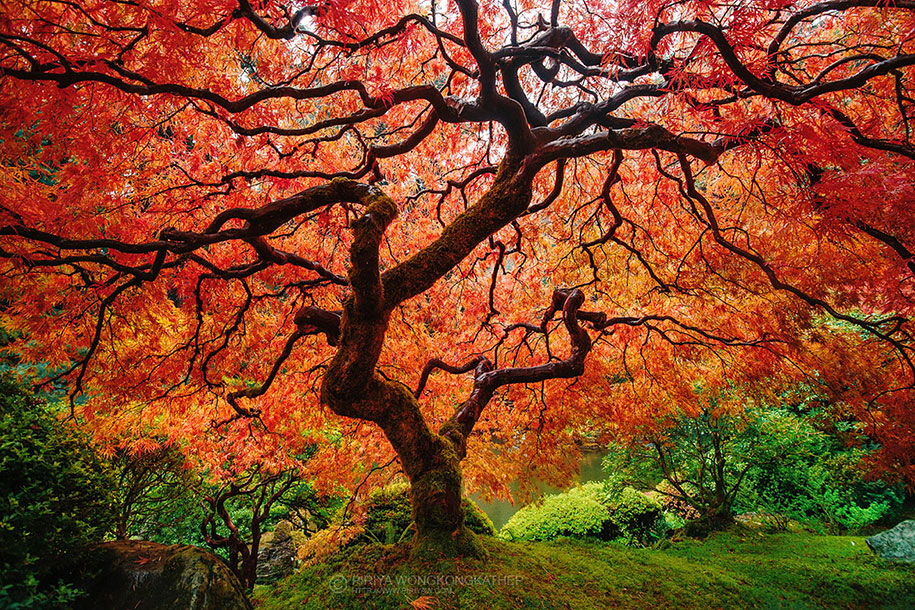autumn-before-and-after-nature-photography-6