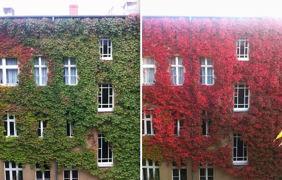 autumn-before-and-after-nature-photography-7